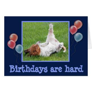 Funny Birthday Card w/Cute Basset & Champagne