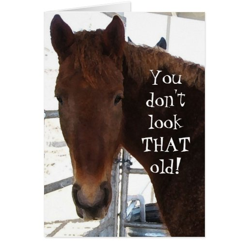 Funny Birthday Compliment TWH Horse Western