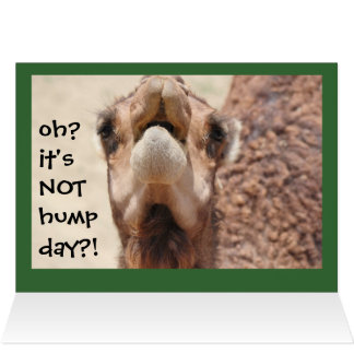 Funny Camel Hump Day Christmas Card (green)