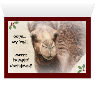 Funny Camel Hump Day Christmas Card (red)