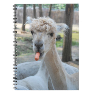 Funny camel with a carrot notebook