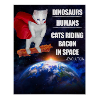 Funny Cat: Evolution Poster