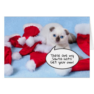Funny cat kitten with santa hats customisable card