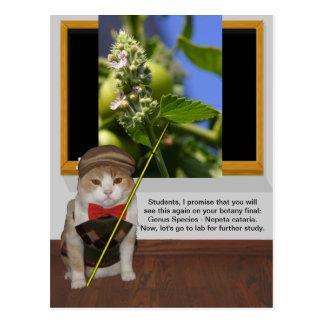 Funny Cat Professor Postcard