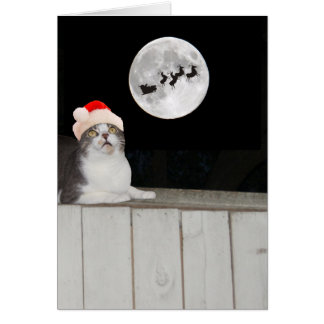Funny Cat Sees Santa Card
