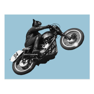 funny cat vintage motorcycle postcard