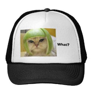 funny-cat, What? Cap