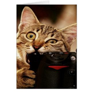 Funny cats - cat camera - cat bite card