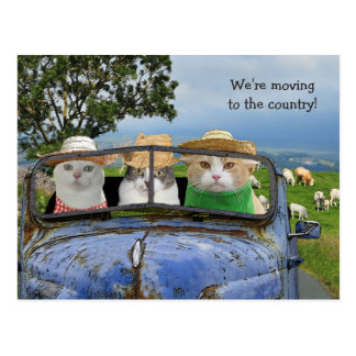 Funny Cats Moving Postcard