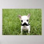 Funny Chihuahua Moustache