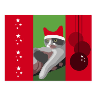 Funny Christmas Calico Cat with Santa Hat Postcard