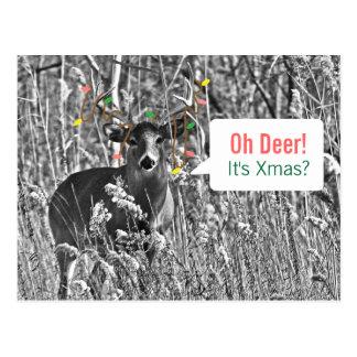 Funny Christmas - Deer with Christmas Lights Postcard
