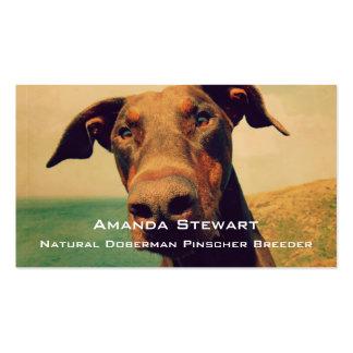 Funny Closeup of a Natural Doberman Dog Pack Of Standard Business Cards