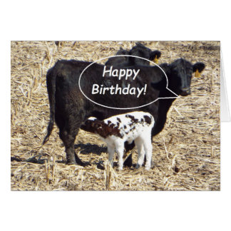 Funny Cow Happy Birthday Card