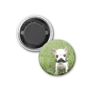 Funny Cute Chihuahua with Mustache 3 Cm Round Magnet