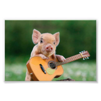 Funny Cute Pig Playing Guitar Photo