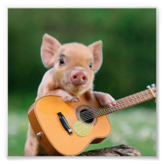 Funny Cute Pig Playing Guitar Photograph