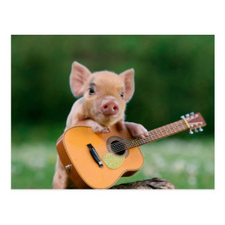 Funny Cute Pig Playing Guitar Postcard