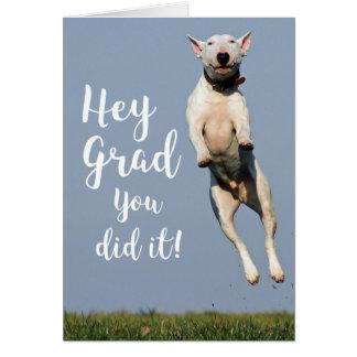 Congratulations funny dog - photo#11