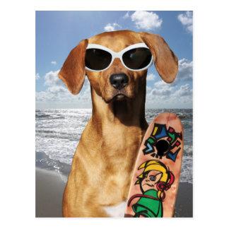 Funny dog Rhodesian Ridgeback surfer beach Postcards