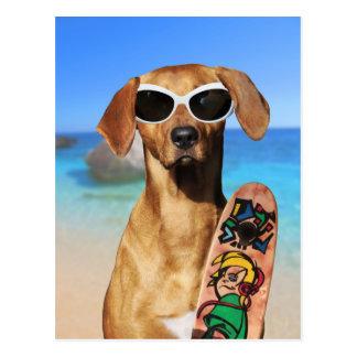 Funny dog Rhodesian Ridgeback surfer beach Postcard