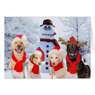 Funny Dogs Season's Greetings Card