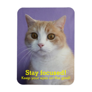 Funny Encouragement with Cat/Kitty with Huge Eyes Vinyl Magnets