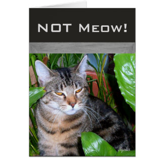"""Funny Expression """" Not Meow"""" Cat Note Card"""
