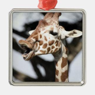 Funny faced reticulated giraffe, San Francisco Silver-Colored Square Decoration