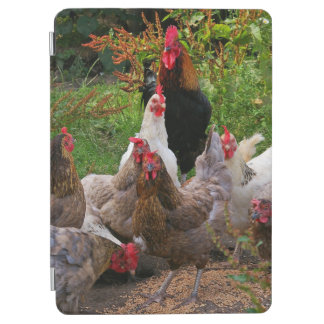 Funny Farmyard Chickens & Rooster iPad Smart Cover iPad Air Cover