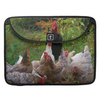 Funny Farmyard Chickens & Rooster MacBook Sleeve
