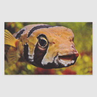 Funny Fish Peeking out at you Stickers
