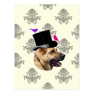 Funny German shepherd dog Postcard