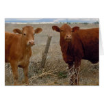 Funny Get Well - Red Cow Animal Humour - Ranch Card