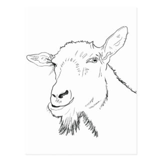 Funny goat novelty art design postcard