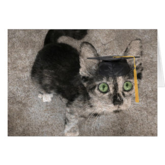 Funny Graduation, Wide Eyed Kitten Card
