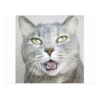 funny gray cat fluffy hilarious open mouth meow postcard