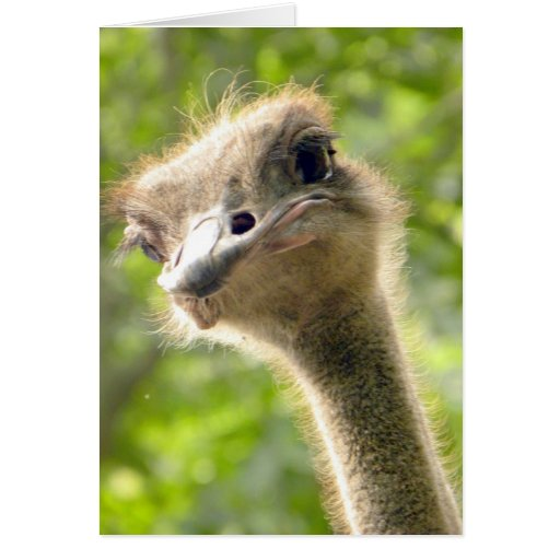 Funny Happy Birthday Card l Ostrich Photography Card