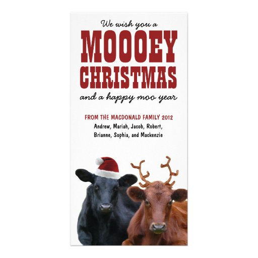 Funny Holiday Cow Couple Mooey Christmas Custom Photo Card