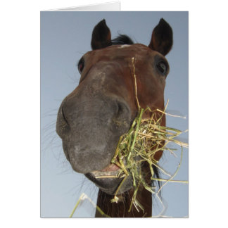 funny horse eating card