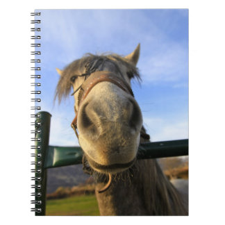 Funny Horse Spiral Note Books