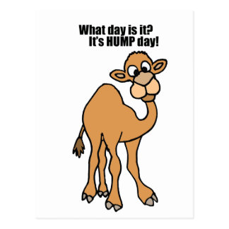 Funny Hump Day Camel Art Postcard