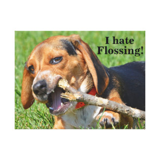 Funny I Hate Flossing Beagle Chewing On A Stick Canvas Print