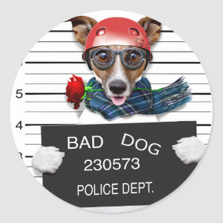 Funny jack russell ,Mugshot dog Classic Round Sticker