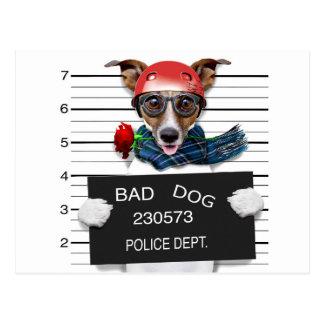 Funny jack russell ,Mugshot dog Postcard
