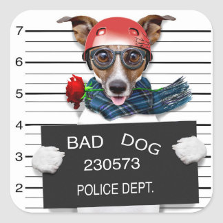 Funny jack russell ,Mugshot dog Square Sticker