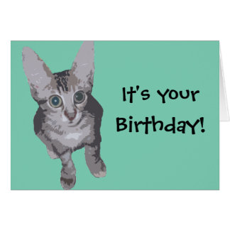 Funny Kitten Birthday Card