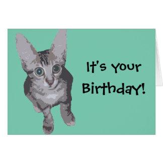 Funny Kitten Birthday Cards