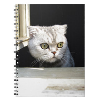 Funny Kitten Spiral Note Books