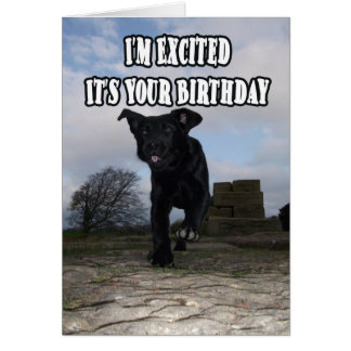 Funny Labrador Dog Excited Birthday Card